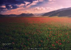 Spring Time - Photo of flowering of Castelluccio of Norcia to celebrate the first day of spring.
