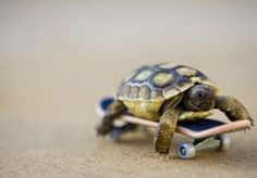 turtle on the go.. I should do this with barty!!
