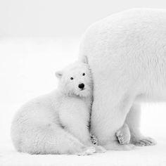 White Arctic and Antarctic Photography – Fubiz Media