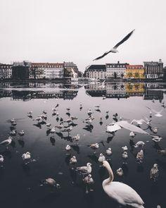 Copenhagen | Merlin Kafka