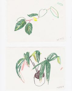 Drawings from @kewgardens for Trailing Gardens #trailinggardens #botanical #plants #kew #hothouse