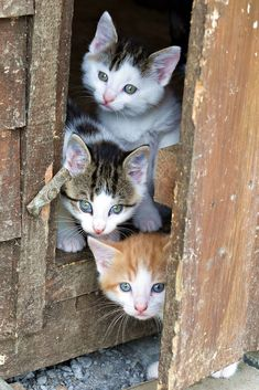 3 adorable little kittens Cute Kittens, Cats And Kittens, Animals And Pets, Baby Animals, Cute Animals, Animal Gato, Funny Animal Photos, Domestic Cat, Beautiful Cats