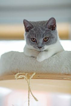 """Cat Trivia: When asked if her husband had any hobbies, Mary Todd Lincoln is said to have replied """"cats."""""""