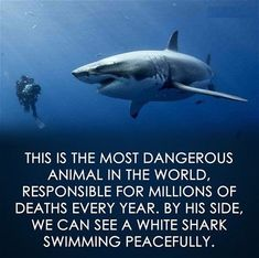 Quotes About Life : Great Whale, Great White Shark, Funny Animal Memes, Funny Quotes, Life Quotes, Animal Humour, Funny Memes, Best Inspirational Quotes, Inspiring Quotes About Life