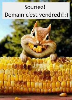 Corny squirrel bright smiles for Thanksgiving Baby Animals, Funny Animals, Cute Animals, Smiling Animals, Dental Humor, Seriously Funny, Tier Fotos, Funny Cards, Chipmunks