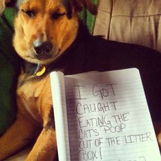 I's so ashamed!