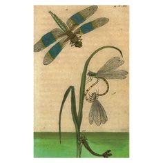 John Derian Company Inc — Dragonfly
