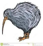 Image result for kiwi bird tattoo