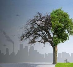 """SMGE JALISCO.- Hoy miércoles 4 de junio a las 20:00 horas, la Conferencia """"Cambio climático y amenazas a la salud. Servicios de los ecosistemas como reguladores de la salud mental"""" a cargo de nuestra consocia Dra. María Guadalupe Garibay Chávez"""
