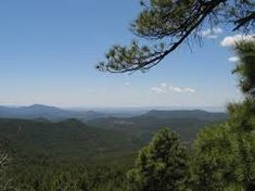 Image result for gila national forest National Forest, Wolf, Romance, Mountains, Nature, Image, Travel, Romance Film, Romances