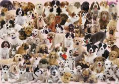 Ravensburger - Dogs Galore Collage Jigsaw Puzzle - 1000 pc