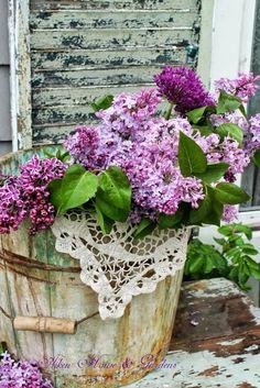 Bucket of fresh lilacs