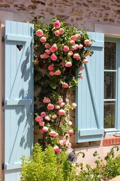 Pierre de Ronsard roses climbing a home's stone wall, Touraine, Loire Valley, France