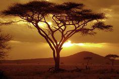 Resultado de imagem para serengeti sunset