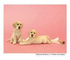 More yellow lab pups -- these wee pieces were hand-sculpted in polymer clay with alpaca flocked coats by Kerri Pajutee