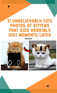 31 Unbelievably Cute Photos Of Kittens That Died Horribly Just Moments Later World 2020, April 10, Halloween Horror, Cute Photos, Funny Comics, Photo S, Halloween Decorations, Kittens, In This Moment