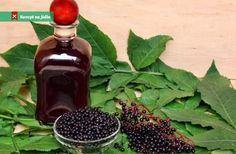 Bezinkový likér recept Natural Antivirals, Elderberry Liqueur, Walk In Clinic, Strep Throat, Fennel Seeds, Natural Supplements, Bellini, Cocktail Drinks, Cocktails