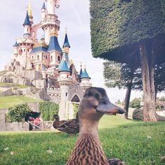 Did you know the Disney Ducks have their own Instagram account?