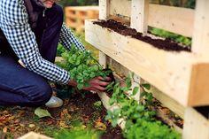 Palette bepflanzen! Aus dem Buch Garten-Projekte für Selbermacher // BLV Buchverlag blv.de Garten Palette DIY Selbermachen