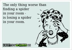 The only thing worse than  finding a spider  in your room -   is losing a spider  in your room.