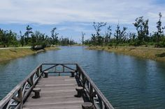 Taitung Forest Park Forest Park, Taiwan, Travel, World, Traveling, Viajes, Trips, Tourism