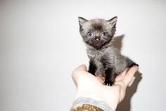 Terry Richardson's Diary | Me and Billy the Kitten