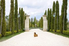 Eleanor (one of the property's two Shar Peis) at the entrance of Borgo Santo Pietro in Tuscany