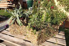 Výroba truhlíku podle Ládi Hrušky. Plants, Planters, Plant, Planting