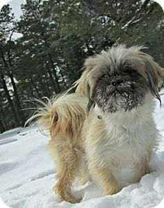 Dahlgren Va Shih Tzu Terrier Unknown Type Small Mix Meet