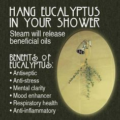 Hanging Eucalyptus in your shower has a lot of benefits, it gets rid of sinuses and blocked nose, it wakes you up and gives you a clear head...