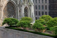 The Rockefeller Center's Rooftop Gardens