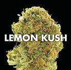 weed for sale online Contact us on www.weedplantdispensary.com  buy medical…