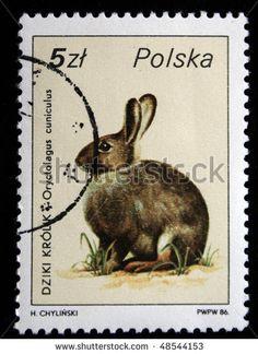 POLAND - CIRCA 1986: A stamp printed in Poland shows European Rabbit - Oryctolagus cuniculus, curca 1986 - stock photo