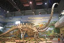 Mamenchisaurus youngi- Wikipedia, the free encyclopedia