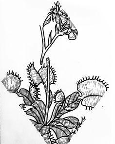 Traditional tattoos venus flytrap google search tattoos venus flytrap line art arte artsy artist artwork blxckink ccuart Choice Image