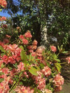 Vår Vegard, med Downs i familien. Floral Wreath, Wreaths, Plants, Floral Crown, Door Wreaths, Deco Mesh Wreaths, Plant, Floral Arrangements, Garlands