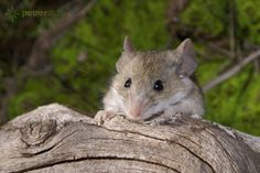 Cute mice, rats and hamters... the little sqeekers.  Enjoy these awesome photos...