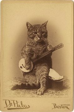 cat with a banjo