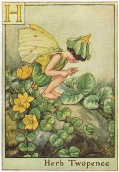 "H = Herb Twopence Fairy by Cicely Mary Barker. Alphabet Flower Fairies, c1934-This is an original vintage Cicely Mary Barker Flower fairies colour print. It is not a modern reproduction..""A Flower Fairy Alphabet""; Poems and Pictures by Cicely Mary Barker, Published by Blackie & Son Limited, London"
