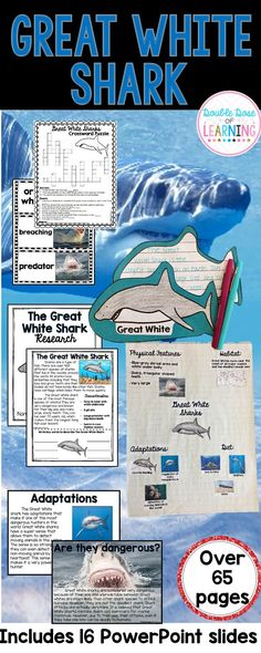 Great White Shark Research Unit for Grades 1, 2, 3 or special education. Students will love to read non-fiction text and practice comprehension on this fun and engaging topic. This unit is perfect for summer school and Shark Week. This unit is packed with activities! Anchor Chart, PowerPoint presentation, a 3 step writing process, comprehension workbook, Smart Art, vibrant vocabulary and so much more!