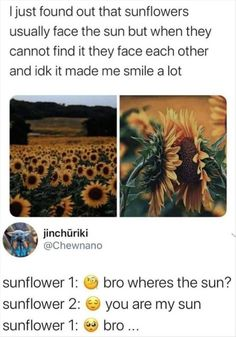 I Smile, Make You Smile, Sunflower Quotes, Facing The Sun, Morning Humor, Stupid Funny Memes, Funny Stuff, Funny Humor, Funny Things