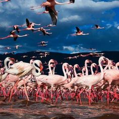 kenya winged migration - Kenya Lake System in the Great Rift Valley