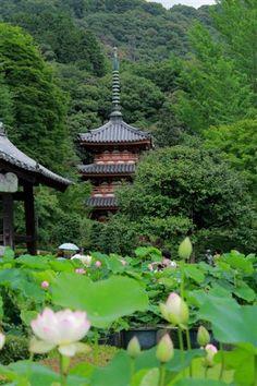 Mimuroto-ji Temple, Kyoto, Japan