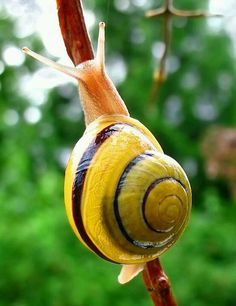 CaracolIdeas, Nature and Art More Pins Like This At FOSTERGINGER @ Pinterest