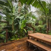 Balinese Garden, Brighton: Tropical Garden The Effective Pictures We Offer You About tropical garden Tropical Garden Design, Tropical Backyard, Japanese Garden Design, Japanese Gardens, Leafy Plants, Exotic Plants, Tropical Plants, Tropical Gardens, Flowering Plants