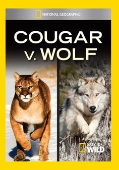 Cougar v. Wolf:   Wolves and cougars are increasingly at war as wolf packs spread into territory dominated for decades by cougars.  Big cat wrangler Boone Smith journeys into the Bitterroot Mountains to study why these two big predators are carrying on the fierce, age-old cats vs. dogs rivalry.When sold by Amazon.com, this product is manufactured on demand using DVD-R recordable media. Amazon.com's standard return policy will apply./i/pThis product is expected to play back in DVD Video...