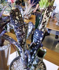 Unusual Plants, Rare Plants, Exotic Plants, Cool Plants, Tropical Plants, Succulent Gardening, Cacti And Succulents, Planting Succulents, Cactus Plants