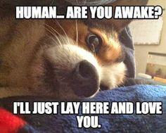 Human, are you awake?  I'll just lay here and love you.