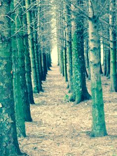 Trees. Beecraigs Country Park
