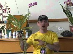 Especialista passa dicas para Cultivo de Orquídeas - YouTube